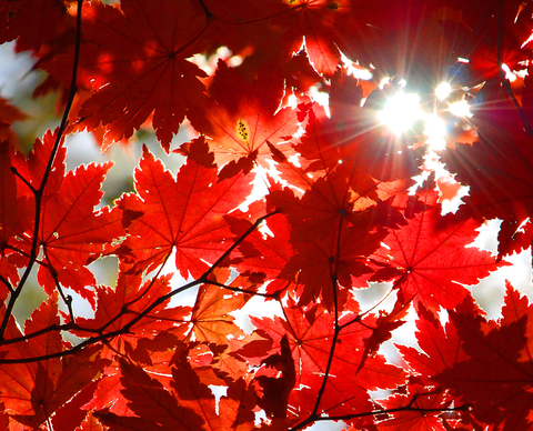 autumn leaves with rays